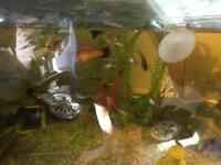 Endler guppies, platies and more