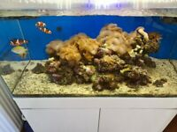 Marine tank with fish and live rock for sale