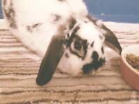 Loop bunny