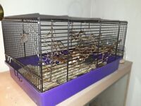 Female harvest mouse and cage