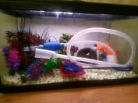 48lts fish tank and accessories