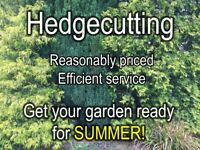 HEDGECUTTING, LAWNMOWING and odd jobs around Norwich