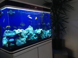 Aquarium - Cleair Aquatics - Black and white