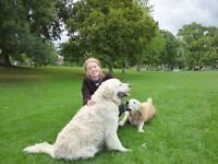 ***Dog Walker ***Pet sitting and housekeeping ***