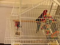PAIR OF ROSSELA PARROT - Male and female. 18months old