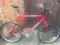 Men's Raleigh bike (large)