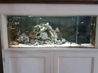 Marine aquarium 100 ltr