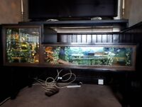 red bearded dragon and professionally made vivarium