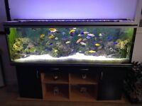 Rena 600 Aquarium Fish Tank Malawi Fluval FX6 Eheim 2180 1200XLT Reflex 800 UV