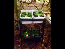 Raised Garden Bed- Beautiful plant/herb frame Baldivis Rockingham Area Preview