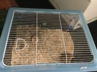 Female gerbils