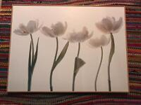 Large tulip picture board, framed
