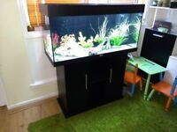 Fish tank Juwel Rio 180