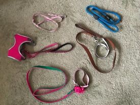 Selection of leads and collars