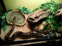 Vivarium and royal python