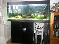 Juwel 240 ,4ft tank with cabinate in black