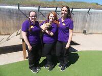 Dogs Trust Dog School Volunteers
