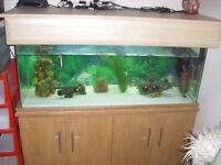4ft tropical fish tank