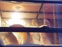 bearded dragon 3ft vivarium terrerium full set up £100