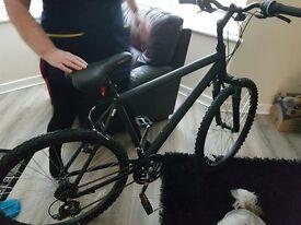 Brand new adult bike
