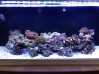 Marine fishtank set up
