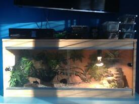 Gecko & vivarium for sale