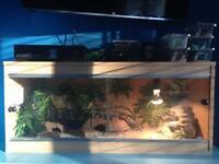 Gecko & vivarium for sale