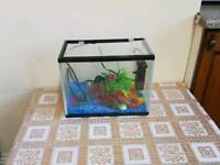 Fish tank with pump
