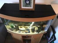 Vision 180 litre fish tank