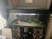 ND aquatics fish tank 5ft