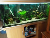 200LTR FISHTANK PLUS MANY EXTRAS. GREAT OFFER FOR FIRSTTIMERS. QUICK SALE NEEDED £250. o.n.o.
