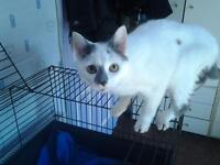 6mth neutered female kitten in need of loving home.