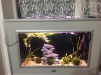 Aqualantis Wall fish tank full setup
