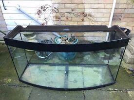 Large Curved Juwel Aquarium Fish Tank