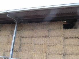 Barn stored Wheat Straw