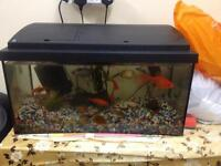 Goldfish with Tank Filters & Accessories