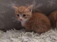 Purrrfect girl Kitten for loving home