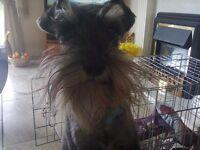 DEDICATED PET SITTER/DOG WALKER