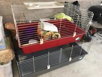 Extra Large Rabbit/Guinea Pig Cage (Grey)