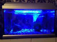2ft fish tank with 26 fish