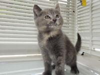 ... Lovely litter of kittens ...
