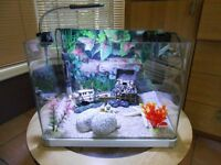 Small Shrimp/Tropical aquarium Mint Condition loads of extras