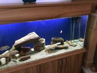 5ft Fish Tank For Sale for sale  Stanley, County Durham
