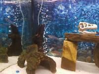For sale full setup fish tank