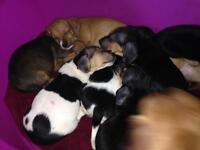 Pups for sale.