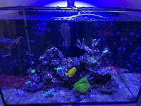 Fish and corals for rehoming
