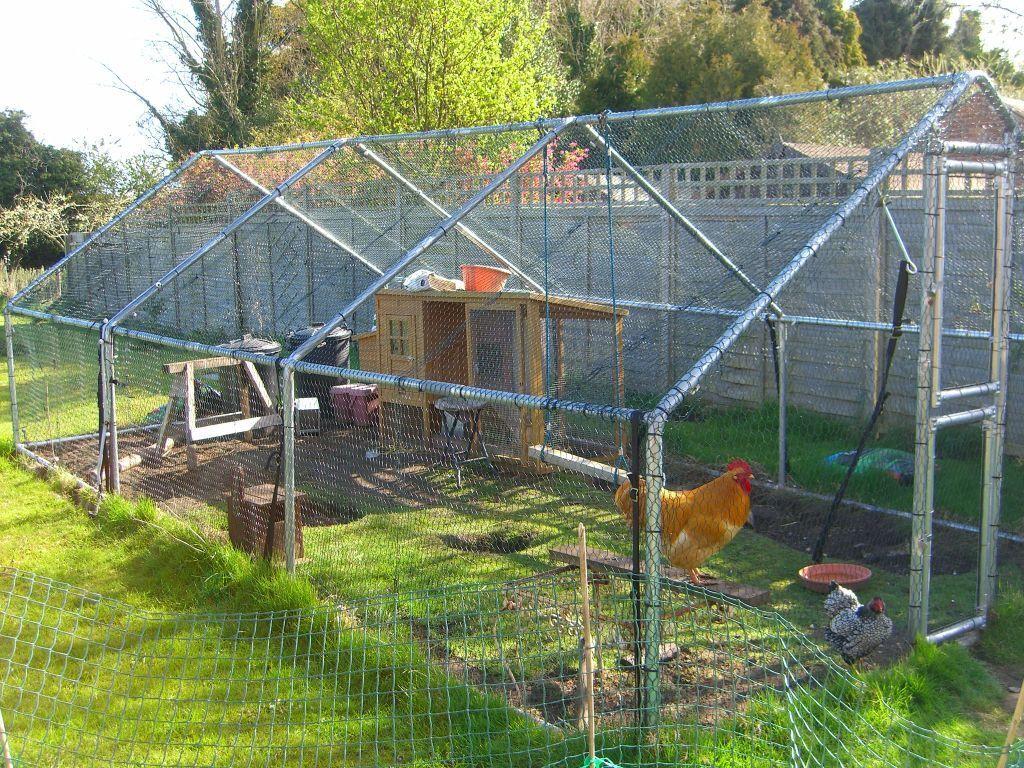 Chicken run 6m x 3m walk in run for dogs cats rabbit hens for Chicken run for 6 chickens