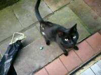 Free bengal cat