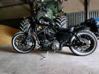 Custom Harley Davidson 883 xl