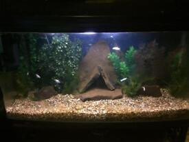 3 foot bowed front fish tank includes every thing